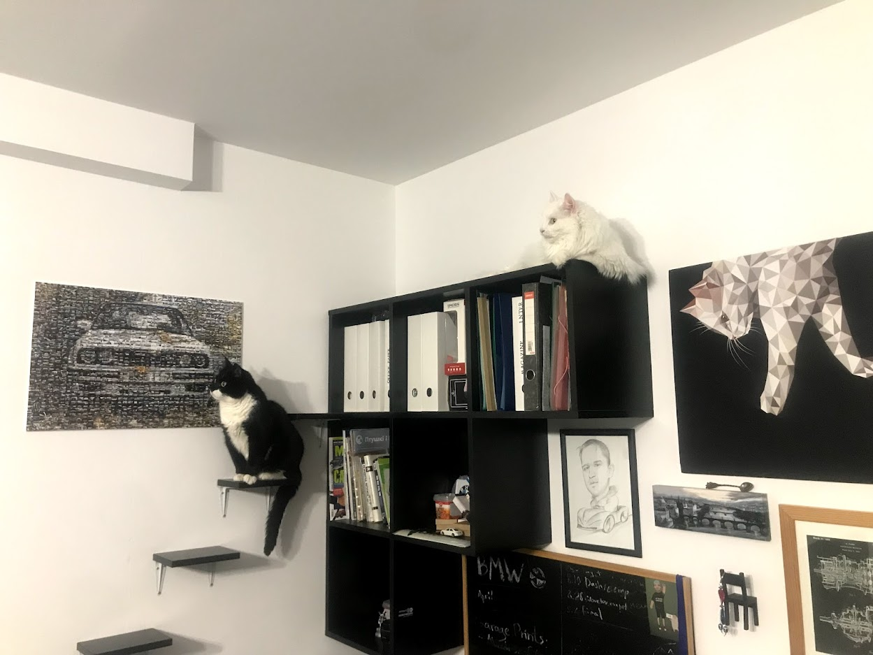 Pavel's cats